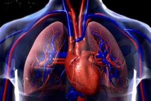 Szív és érrendszeri felmérés